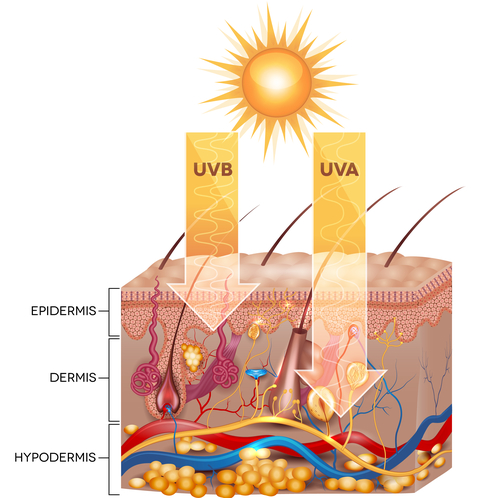 Uvb Uva Damages in skin